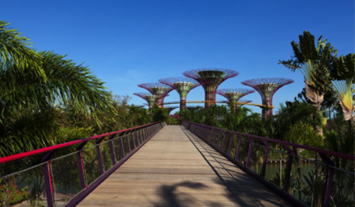 Singapore's dramatic Gardens